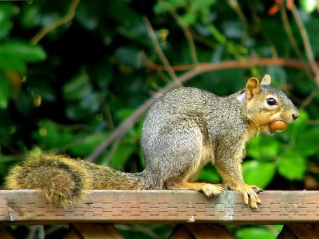 blog-flickr-squirrel1558921427_bb56d32473_b.jpg